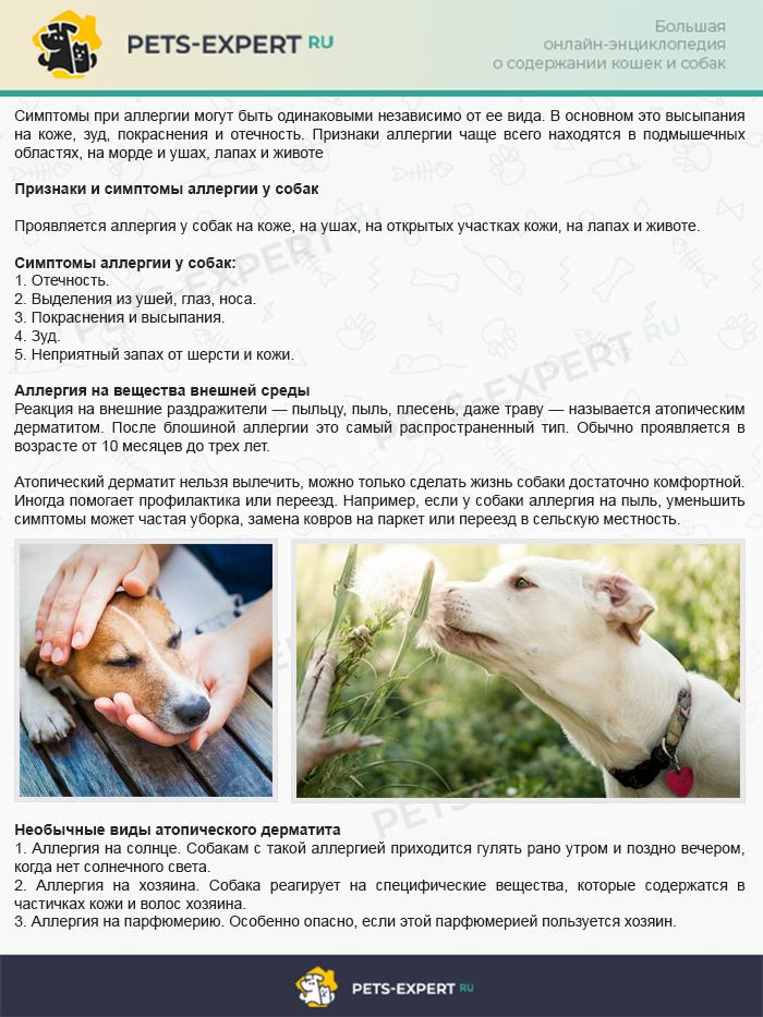 Признаки и симптомы аллергии у собак