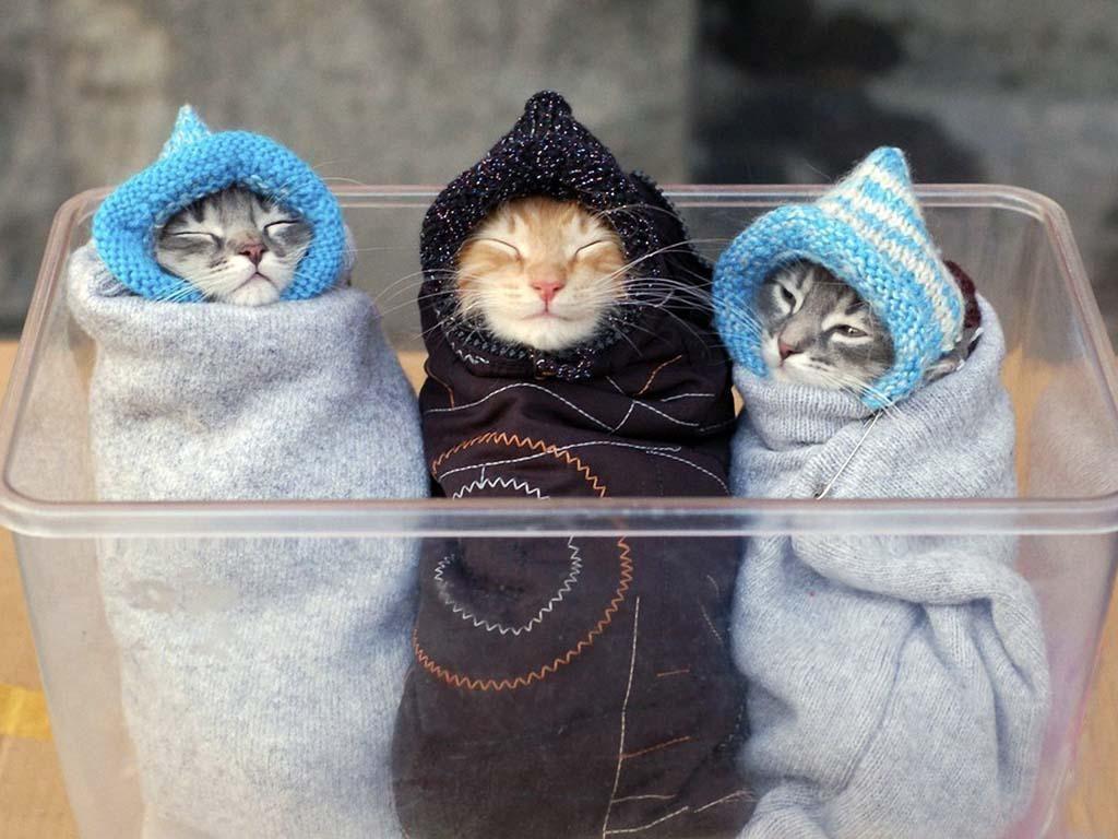 Пример правильного пеленания кота