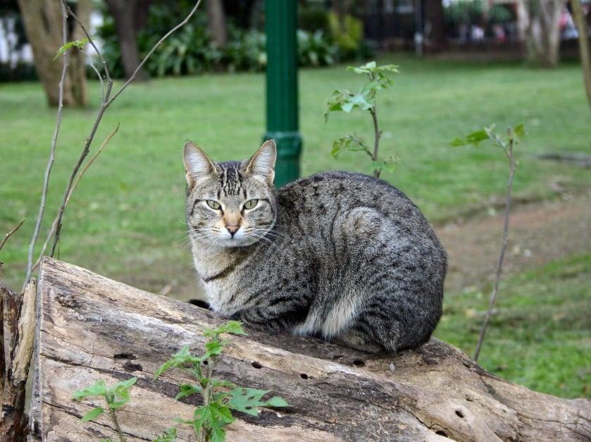 Приручить кота -задача для упрямых