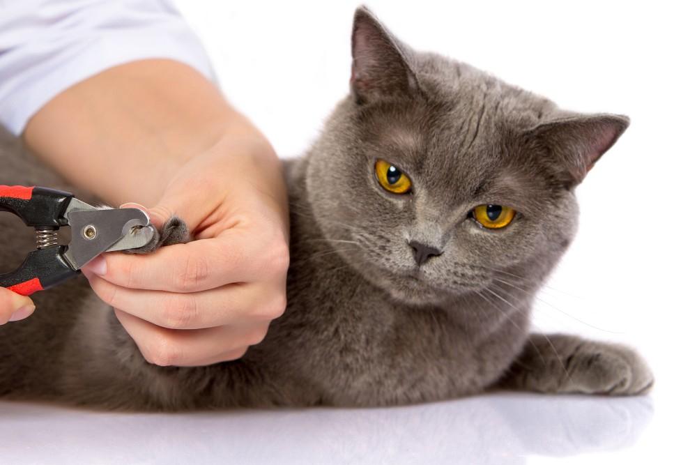 Приступать к процедуре желательно при положительном настрое как у кошки, так и у хозяина
