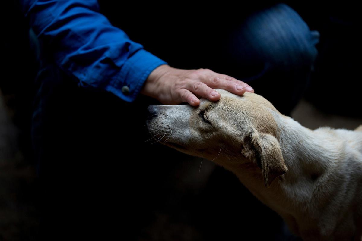 Притормаживание может перерасти в поглаживание, если собака осознала недопустимость своего поведения