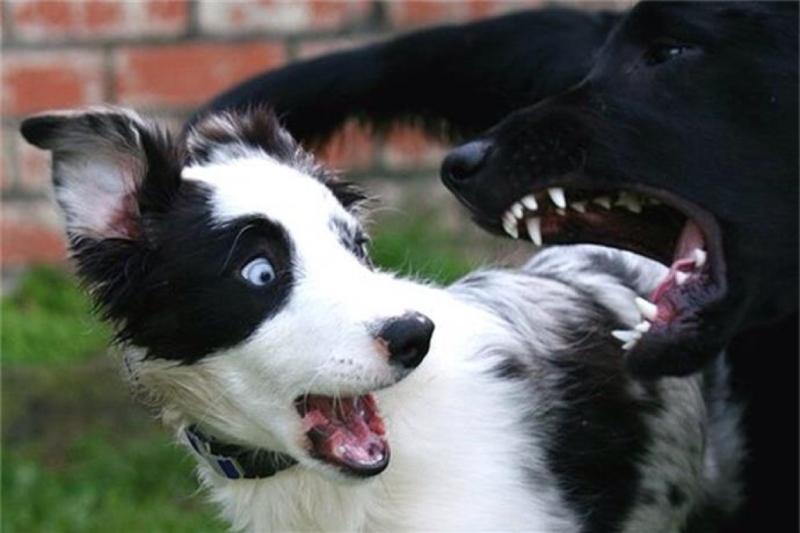 Причиной дрожи собаки может стать испуг