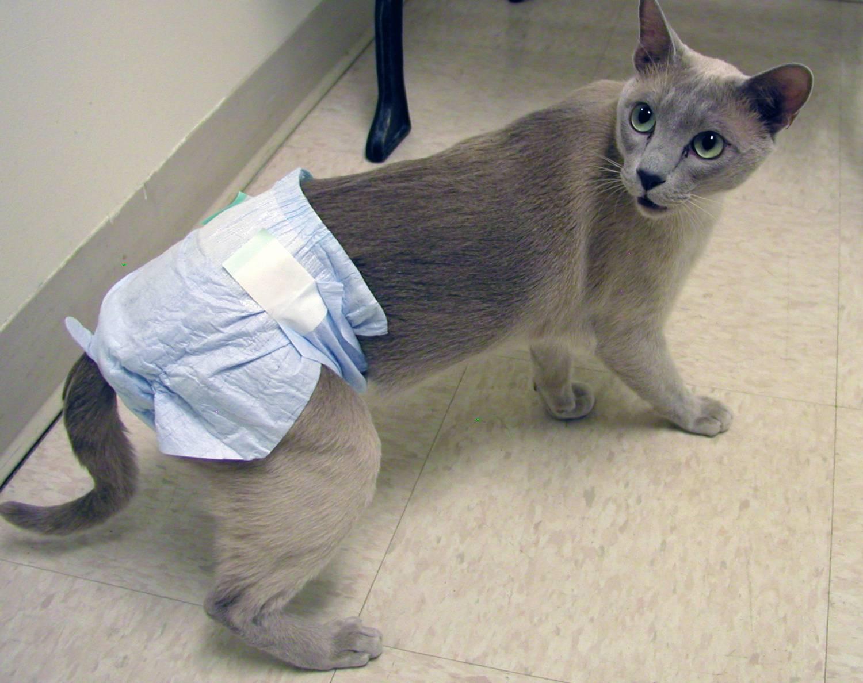 При недержании мочи коту надевают специальные пеленки