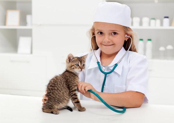 При некоторых симптомах кошку нужно немедленно показать врачу
