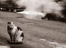 При отлове бездомных кошек нужна осторожность