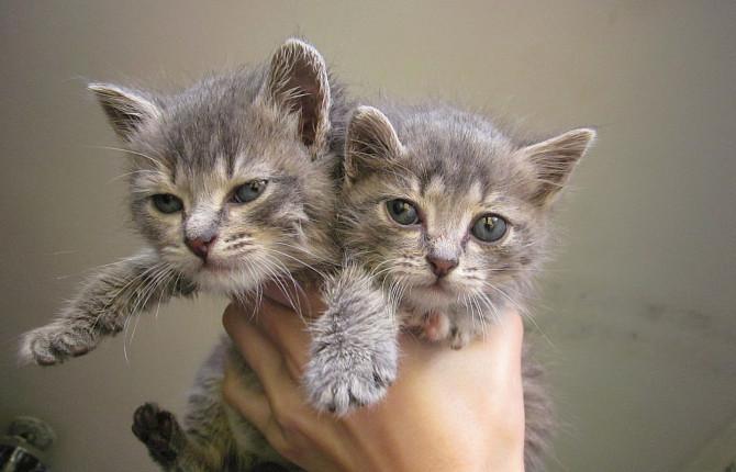 При отсутствии лечения диареи кошка может погибнуть из-за обезвоживания