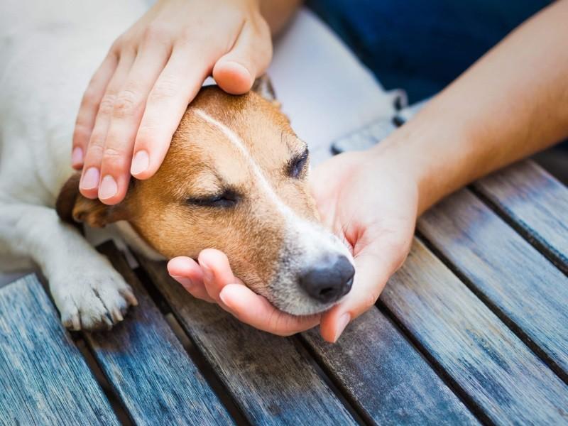 При приступе необходимо погладить собаку по шее в области гортани