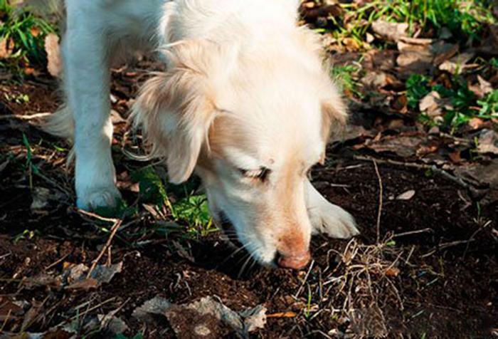 Пробуя чужие какашки на вкус, собаки изучают друг друга