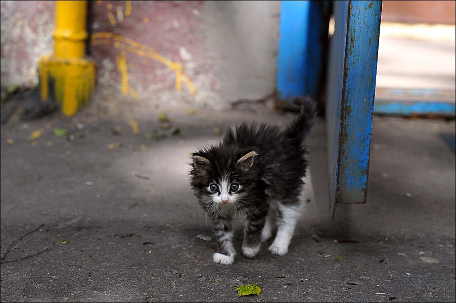 Пугливые кошки долго не хотят идти на руки