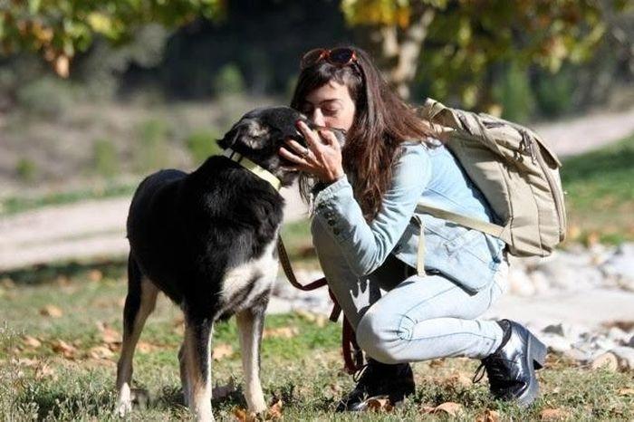 Пёс, к которому относятся с пониманием и любовью, будет безоговорочно слушаться хозяина