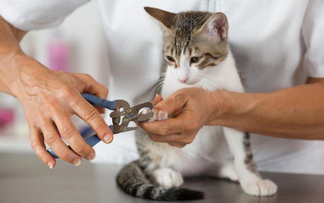 Работа с загрязненным инструментом в худшем случае может привести к заражению крови у животного