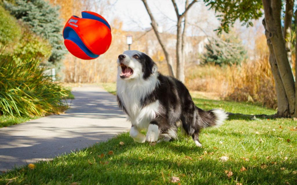 Развитый стайный инстинкт у собаки позволяет ей легче сходится с животными