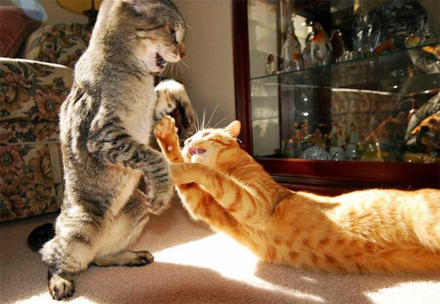 Разметка квартиры позволяет котам избегать прямых конфликтов