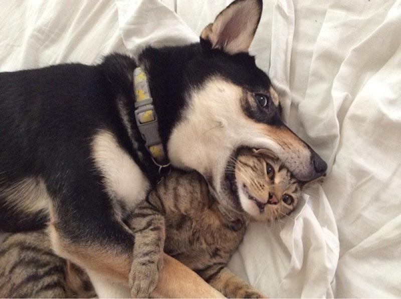 Разные способы демонстрации своих эмоций часто являются причинами конфликтов между двумя животными