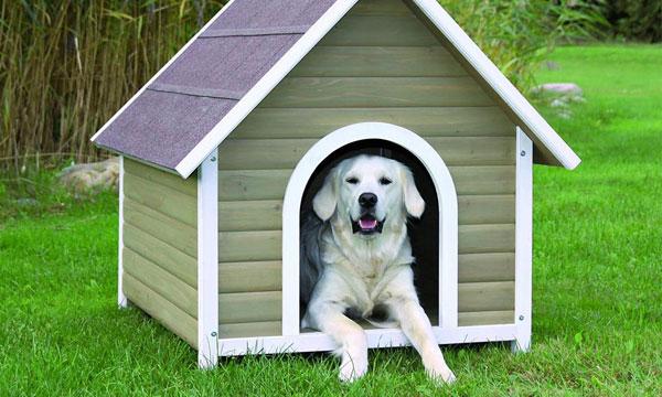Раньше эта собака жила в квартире