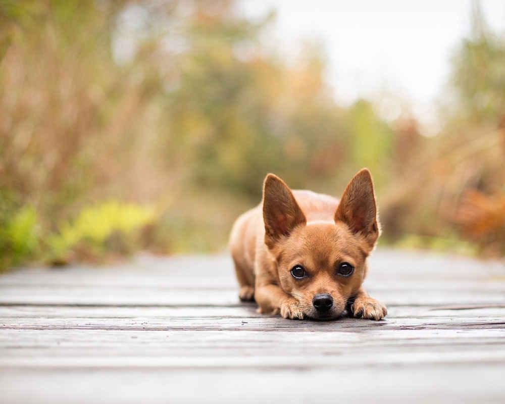 Распределяйте время прогулок так, чтобы не переутомить питомца