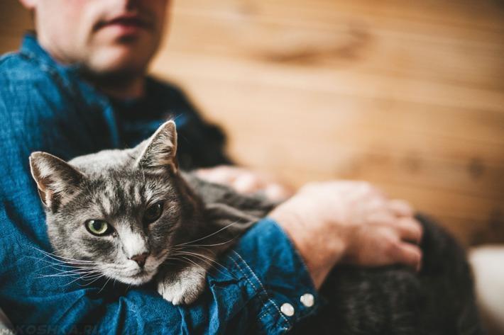 Распространенная ошибка хозяина - полагать, что кот сможет сразу понять, что от него требуется