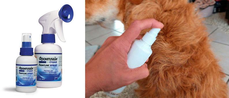 Распыление спрея на собаку