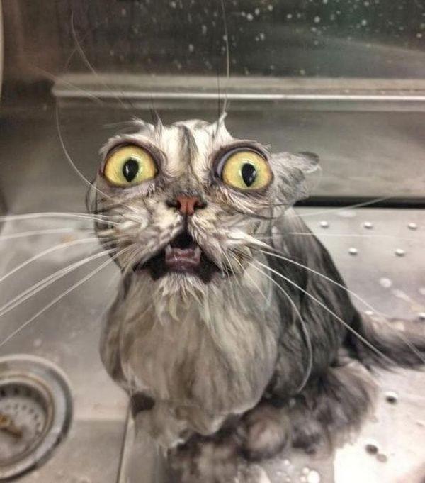 Реакция кота на купание