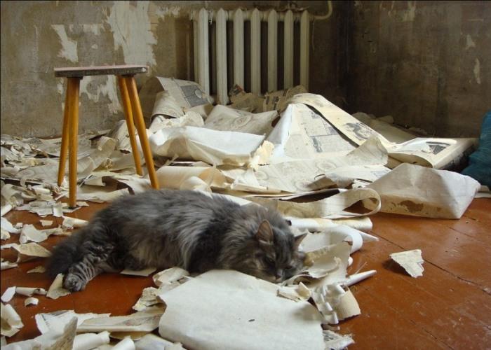 Ремонт активизирует кота и побуждает его к решительным действиям