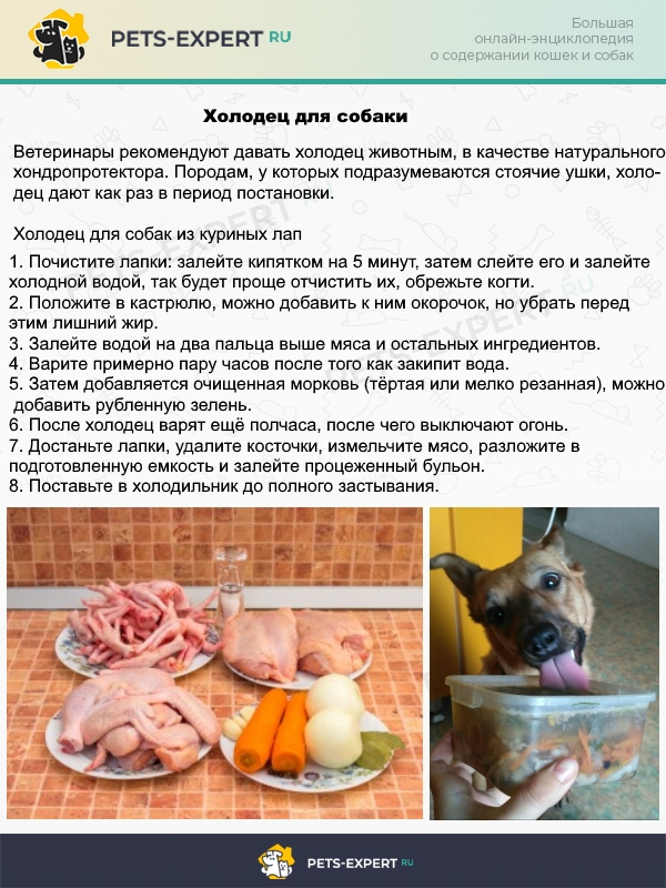 Рецепт холодца для собак в период постановки ушей