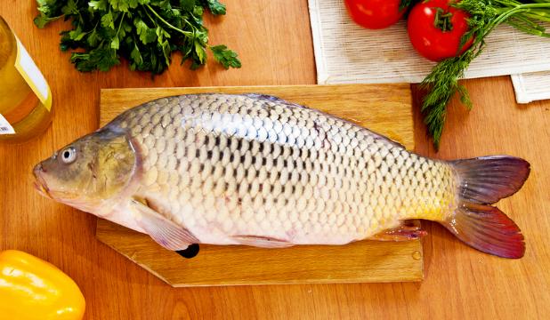 Речная рыба опасна для здоровья питомца в силу часто встречающихся в ней паразитов