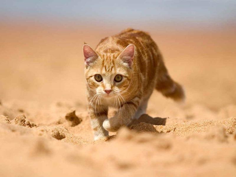 Ритуал закапывания может многое рассказать о кошачьем поведении