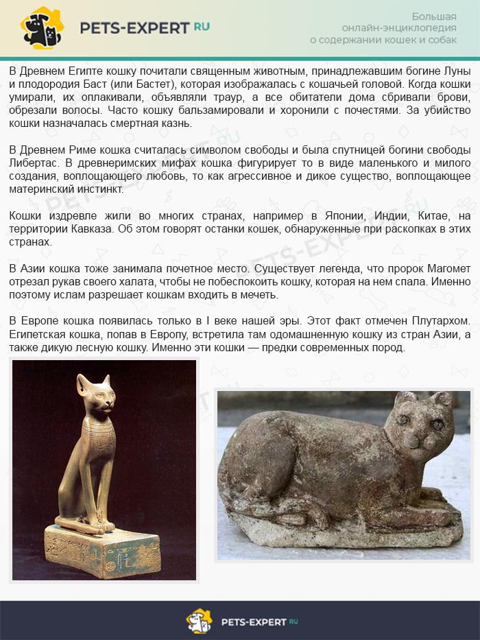 Роль кошек в разных странах