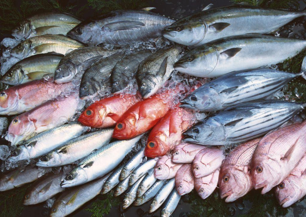 Рыба не должна преобладать в рационе кошки, поскольку может вызвать переизбыток фосфора