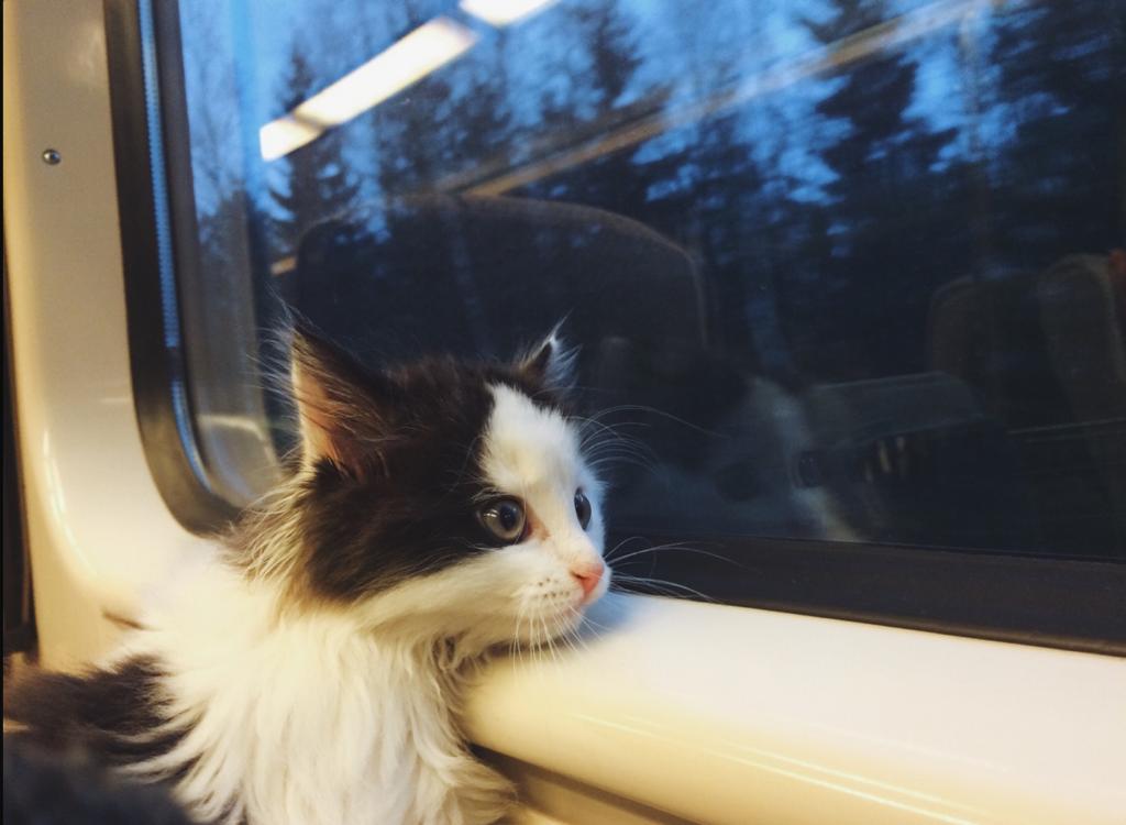 Самая простая процедура перевозки кошки распространяется на все электрички