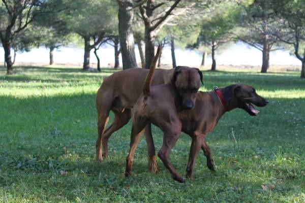 Случка - не только половой акт между животными, но и заключение массы договоренностей между их владельцами
