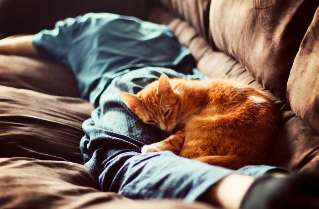 Смерть любимца провоцирует приступы самообвинения в халатности и равнодушии к коту