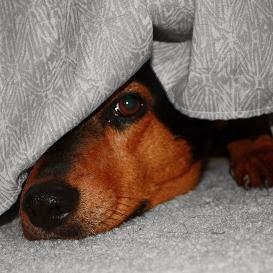 Собака боится людей, что делать?