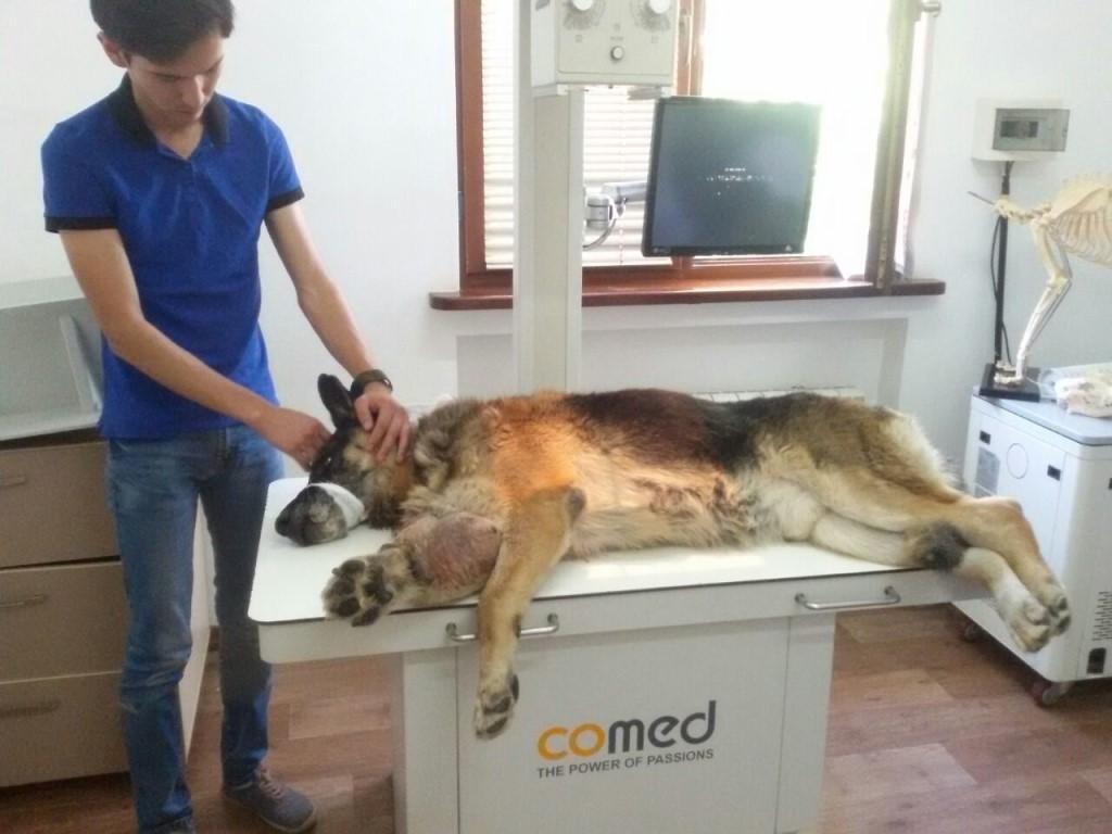 Собака в рентгенкабинете