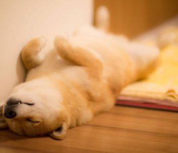 Собака дергается во сне