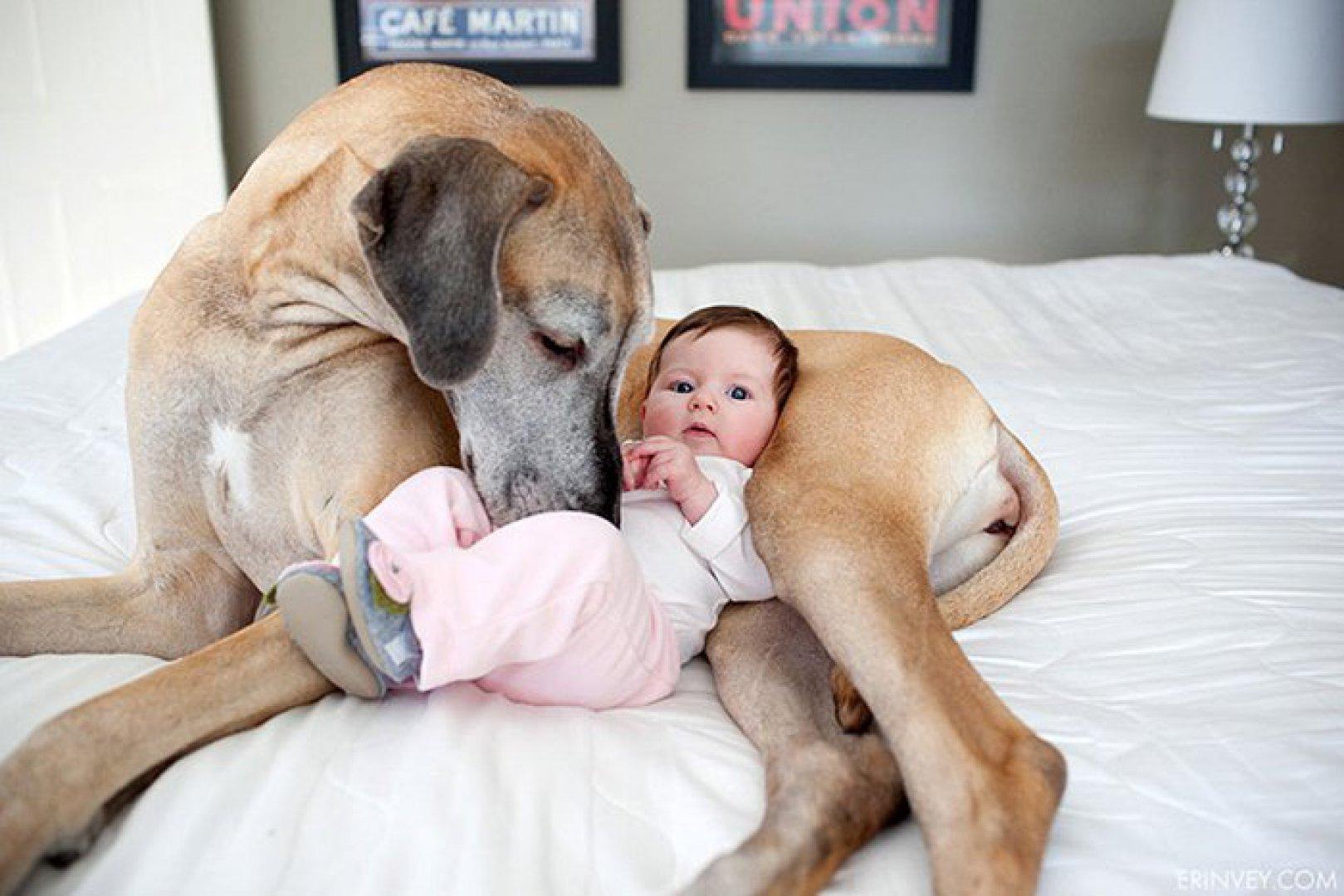 Собака для семьи
