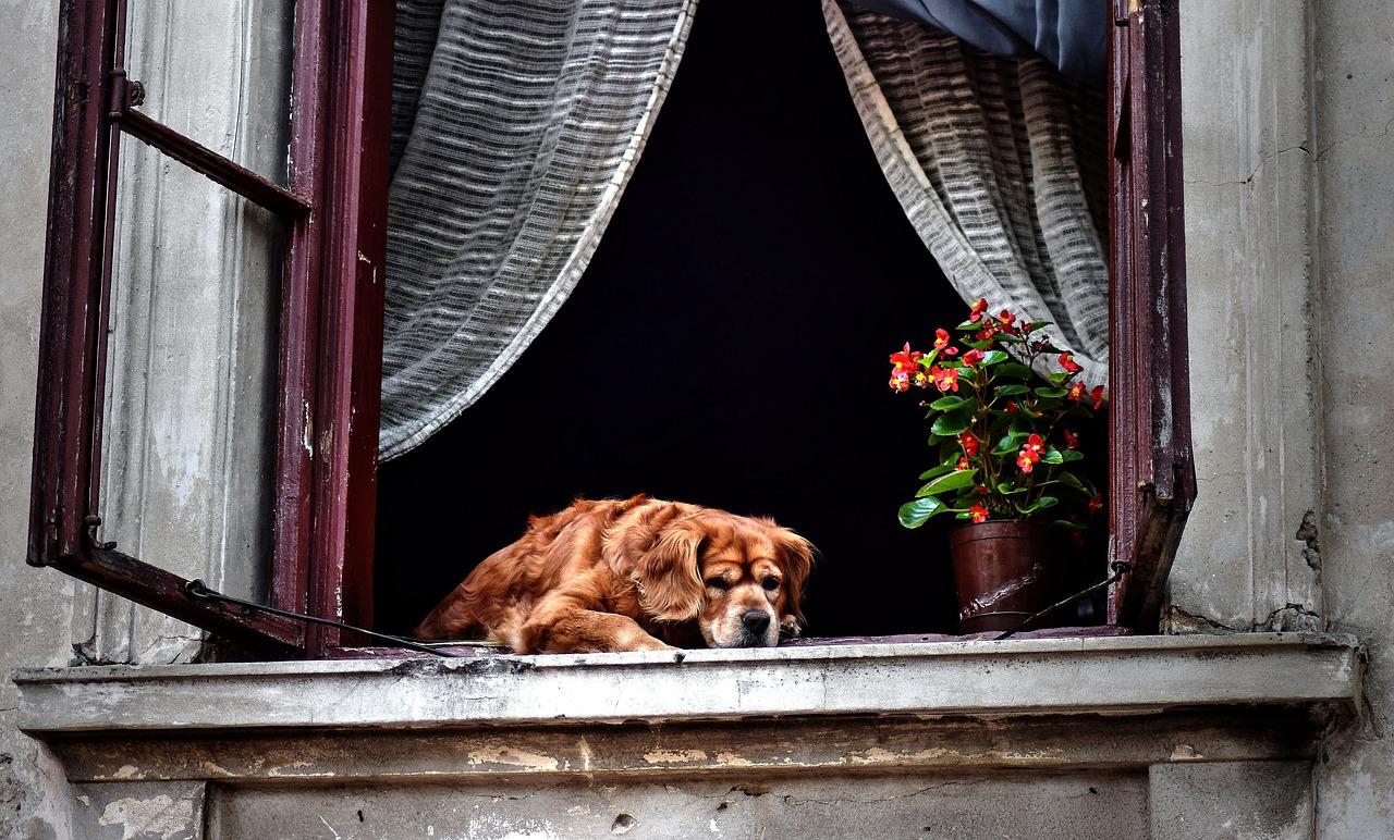 Собака может портить вещи из-за скуки или долгого одиночества