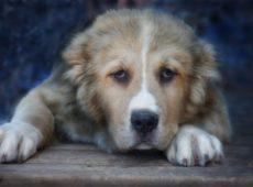 Собака не способна расходовать накопившуюся энергию