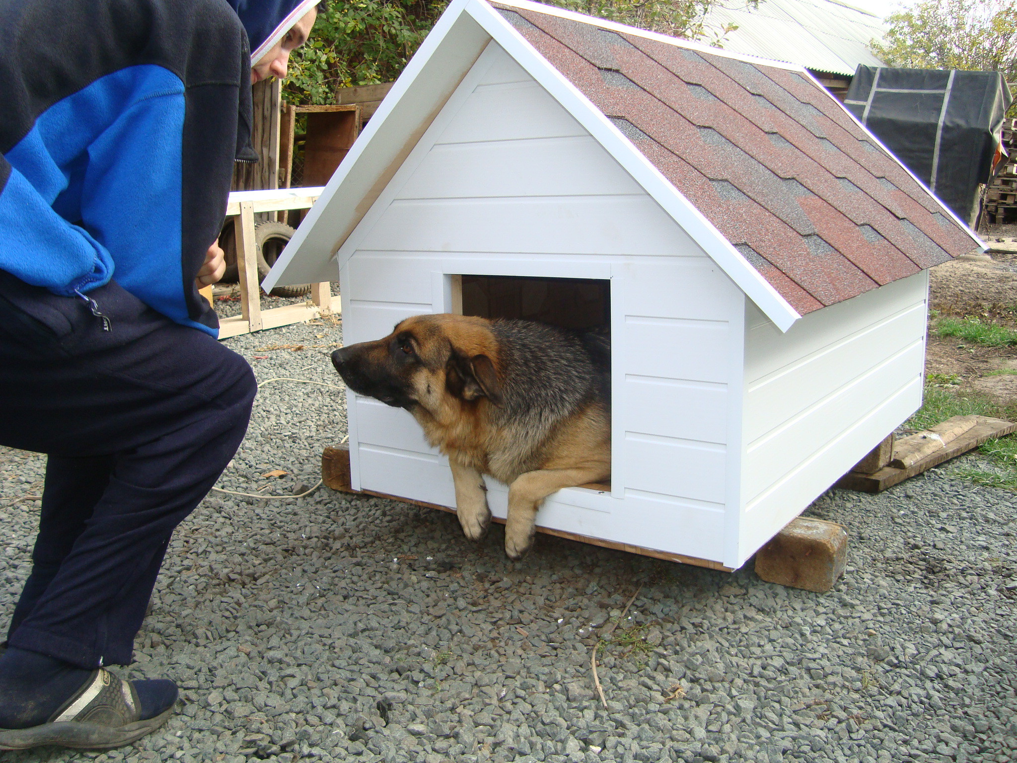 Собака общается с хозяином во время приучения к будке