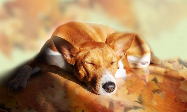 Собака стала вялой и сонной? Это повод обратиться к ветеринару
