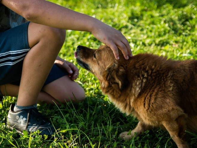 Собаке нужно помогать преодолевать страх