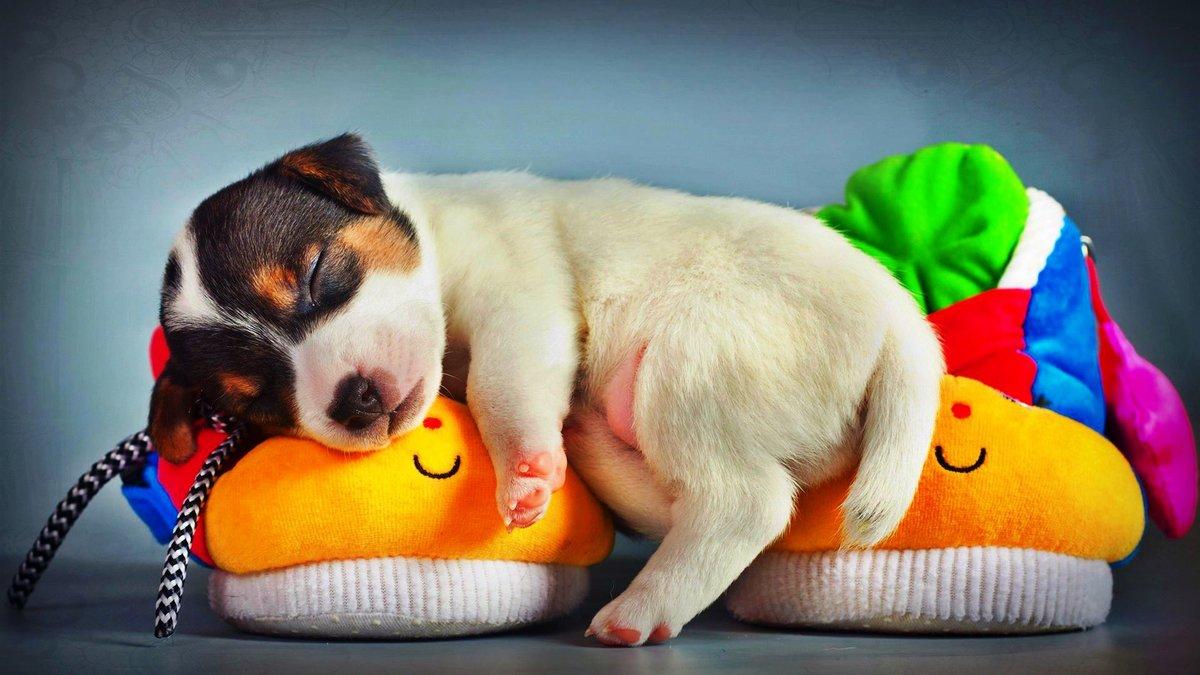 Собаки начинают видеть свои первые сны еще находясь в утробе матери