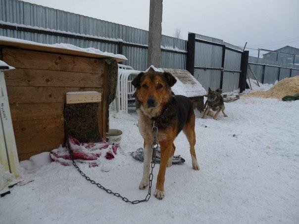 Собаки на охранной службе
