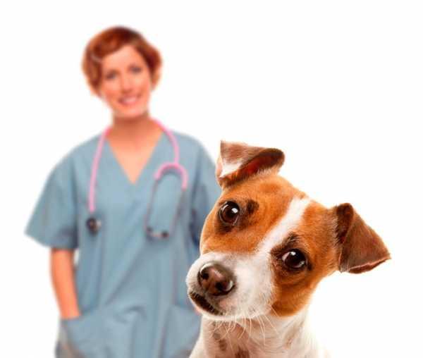 Собаки, склонные к экземе, должны чаще проходить плановые осмотры у ветеринара