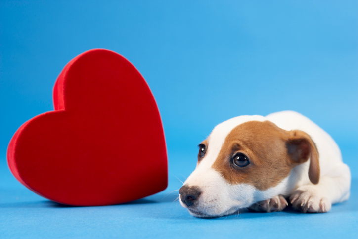 Собаки с проблемами сердца могут жить долго