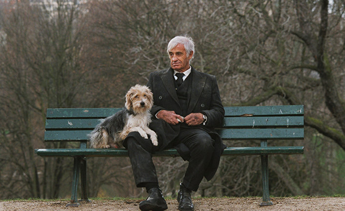 Собаки являются верными спутниками человека