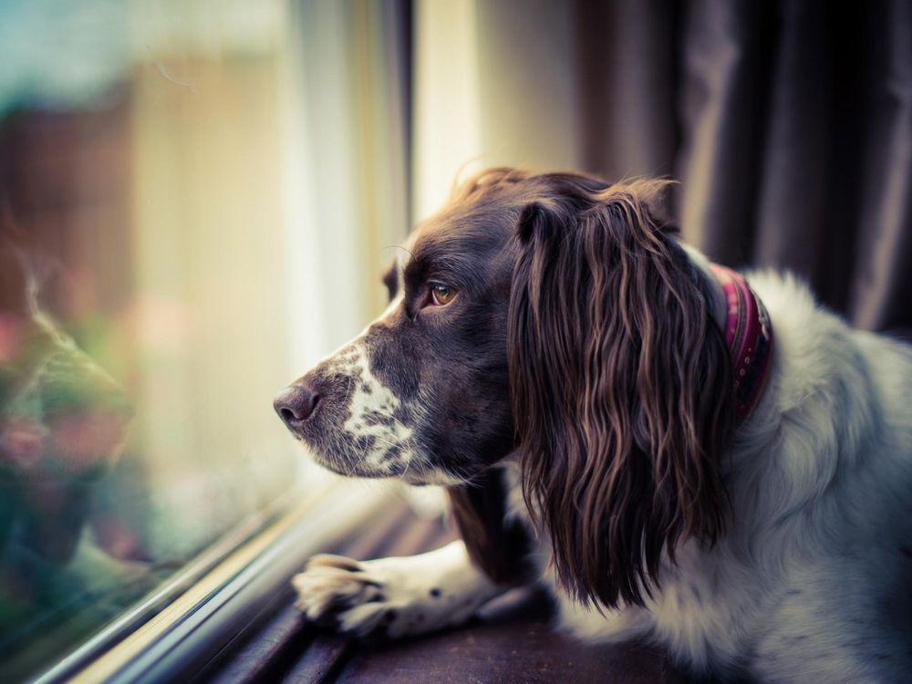 Собаку необходимо как можно раньше начать знакомить с людьми и другими животными