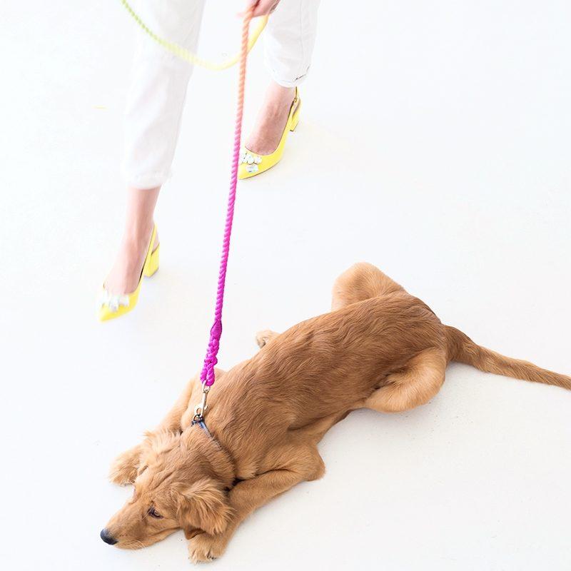 Собачий протест