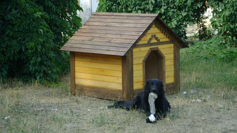 Собачья будка должна быть комфортной