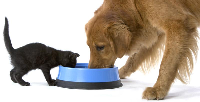 Совместное кормление животных будет провоцировать дополнительные ссоры и конфликты